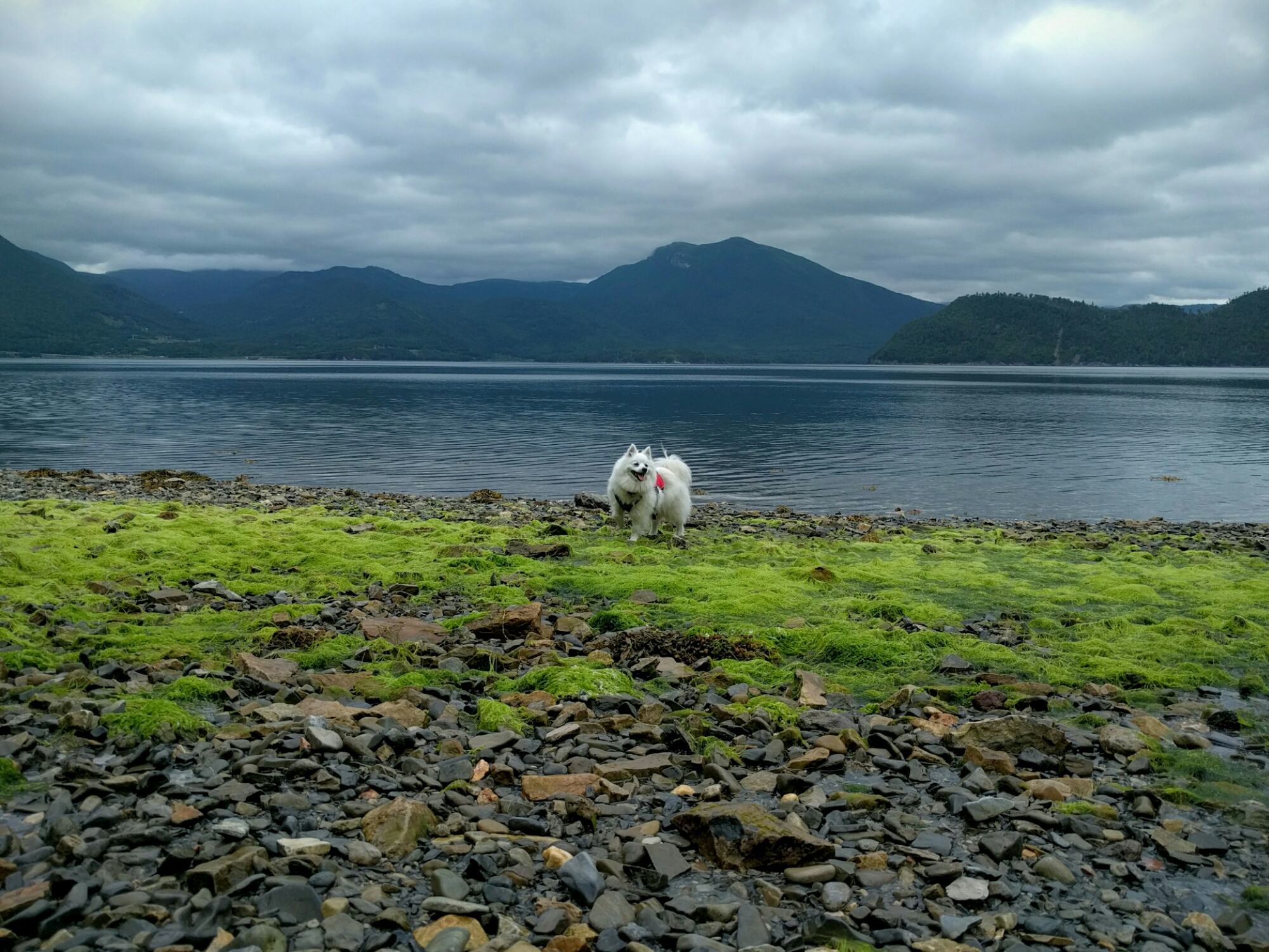Fletcher plays on the beach at Trout River in Gros Morne, NL.